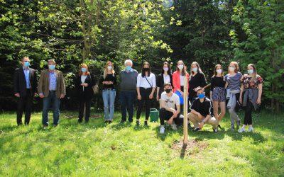 Posaditev drevesa, OT4